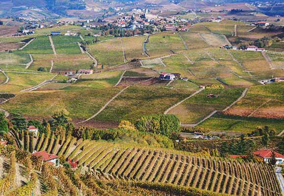 nebbiolo vineyards