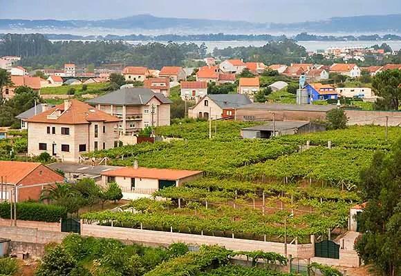 Albarino wine country