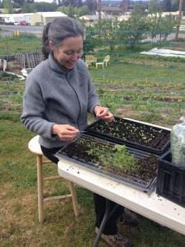 Bridget potting up seedling