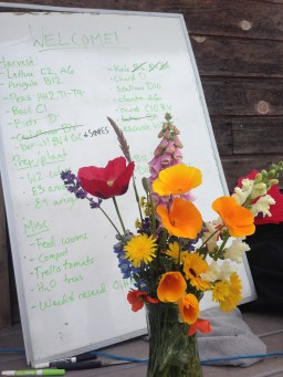 Task lists and pretty flowers