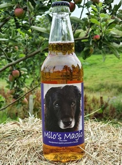 Temple Cider – Milo's Magic – Reviewed