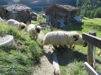 We walked through their pasture.