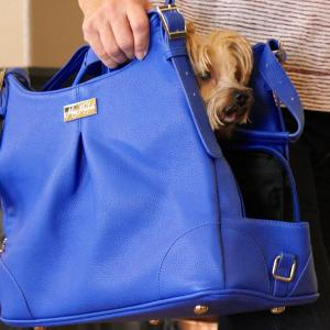 dog in blue mia michele carry bag