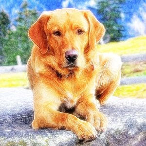 custom dog portrait front view with artistic background