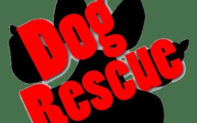 Local Rescue Organizations