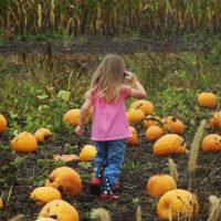 Squash & Pumpkins