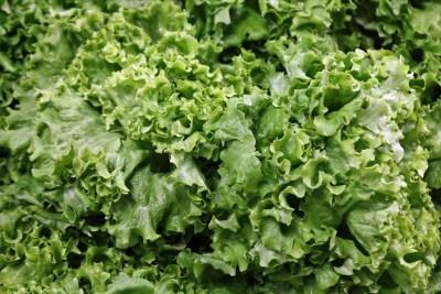 lettuce, vegetables, food