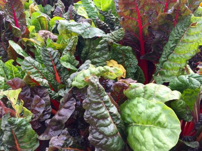 swiss chard, leafy greens, chard