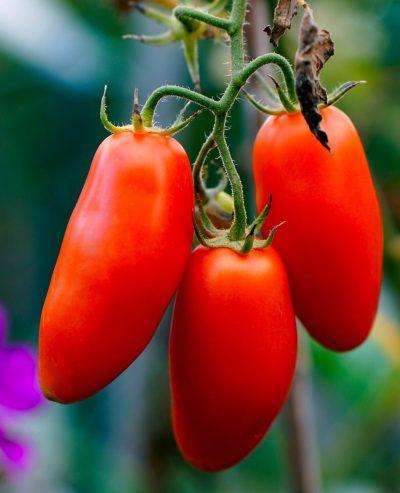 tomatoes, ripe, vegetables