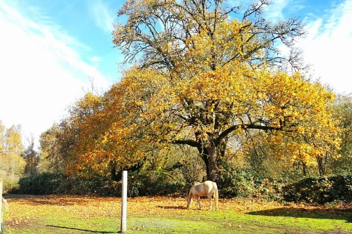 golden tree horse farm