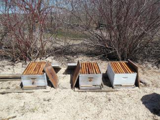 Empty hives 2013