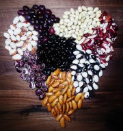 Heirloom Beans (13)