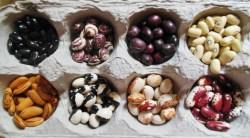 Heirloom Beans (5)