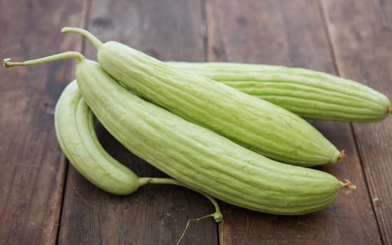 Organic Armenian Cucumbers  Riverdog Farm  SF Bay  Good
