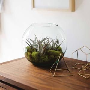 Newly - Terra Vase