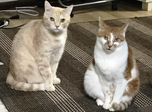 気品ある兄弟ネコの画像