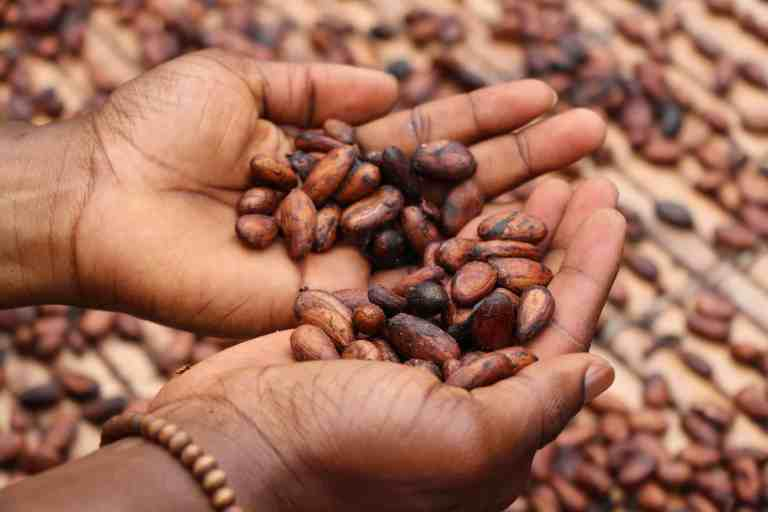 cacao beans benefits