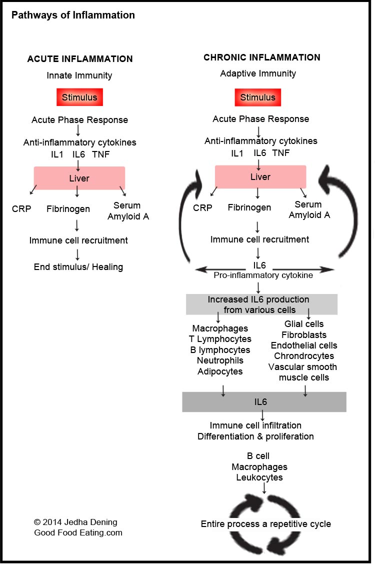 hight resolution of pathways of acute and chronic inflammation