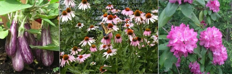 nice garden closeups for banner