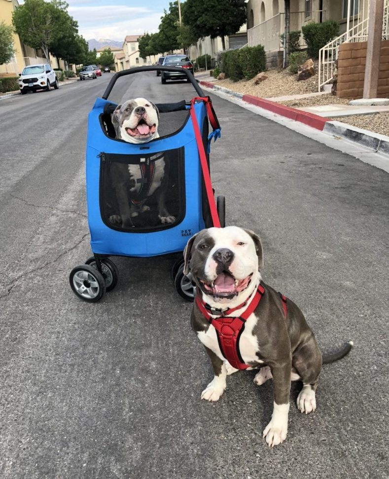 Out for a walk