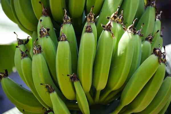Green Banana Health Benefits