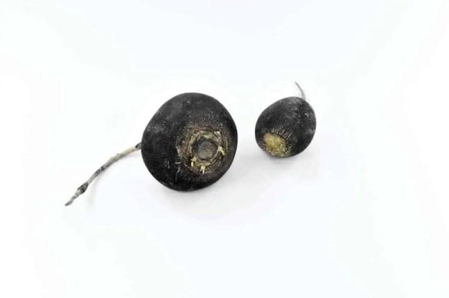 Health and Beauty Benefits of Black Radish