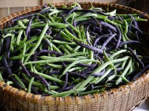 bountiful beans!