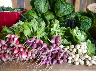 radishes and salad turnips