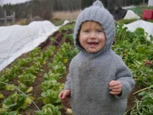 Waylon in the lettuce