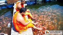 Hikkaduwa Lagoon Safari and Rooms Sri Lanka (11)