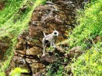 Kudawella sri lanka (19)