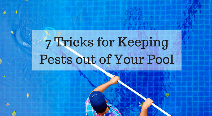 7 Tricks for Keeping Pests out of Your Pool