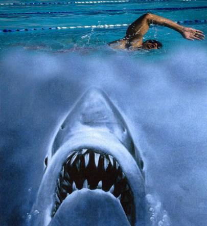 Shark and swimmer