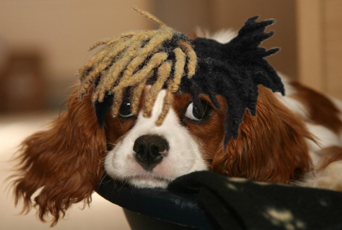 dog hair 3.jpg