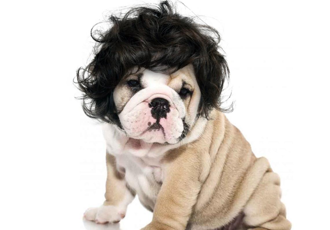 dog hair 5.jpg