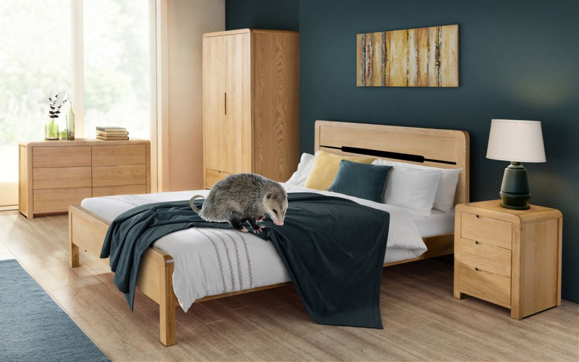 bedroom opossum