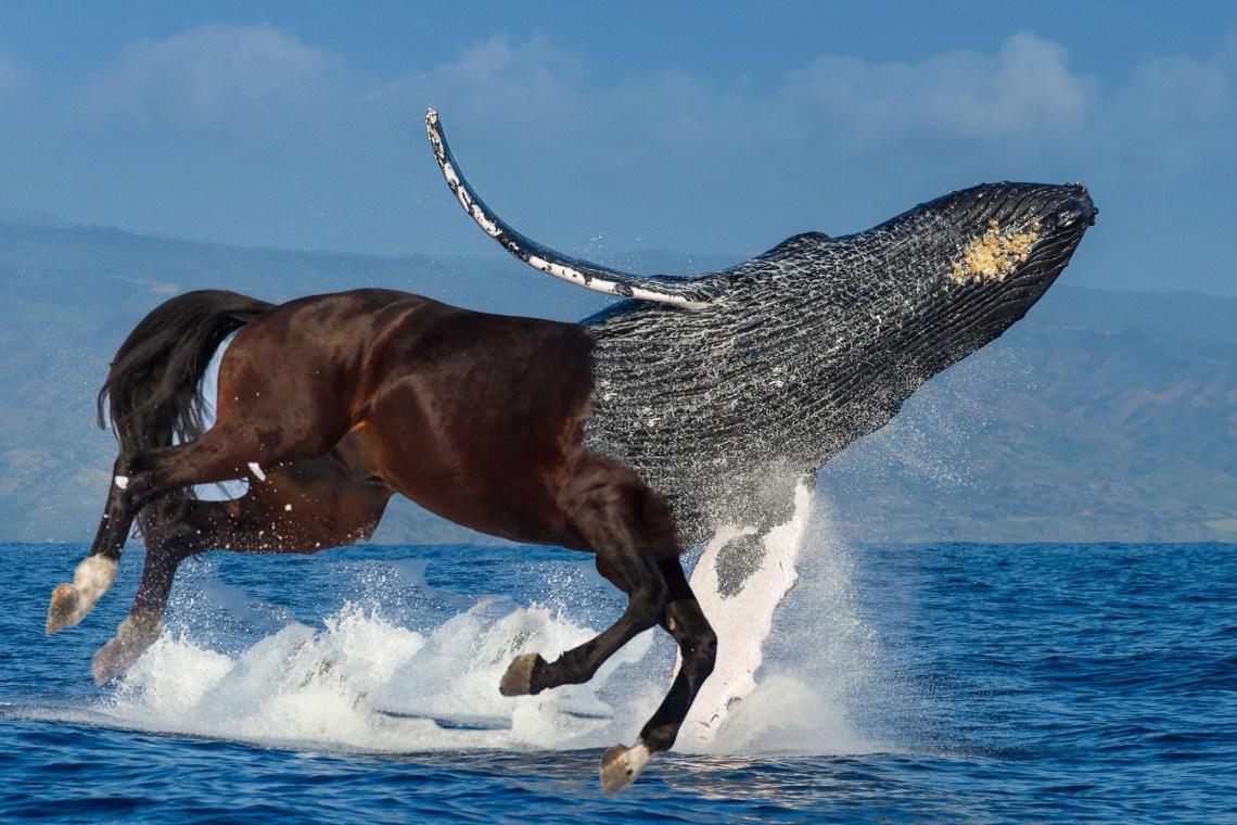 whale centaur