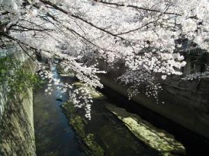 神田川2012DSCF1574