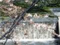 神田川の桜と目黒川の桜の違いはどこにある!比較すると・・・・・
