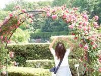 神代植物公園のバラの開花状況と見頃に種類は!三鷹から小田急バスで行く!