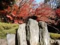 小石川後楽園の紅葉2017の見頃は&しだれ桜や藤、花菖蒲の開花時期は