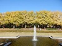 昭和記念公園の紅葉2019 イチョウ並木の現在と見頃はいつ!?