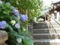 白山神社のあじさいの開花状況と見頃は!祭りの開催期間と歯ブラシ供養って?