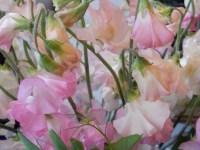 目黒の花屋さん、今注目の「花すけ」が卒業式に贈る花のおすすめは何!