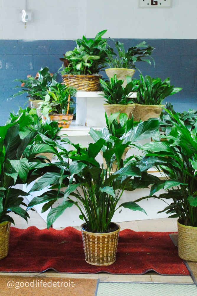 Jay's Flower Shop in Detroit specializes in a variety of flower and plant arrangements.