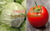 tomato,cabbage,มะเร็งปอด,มะเร็ง,กะหล่ำปลี,มะเขือเทศ
