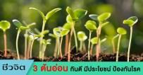 ต้นอ่อน, ต้นอ่อนของพืช, ต้นอ่อนกินได้, ป้องกันมะเร็ง
