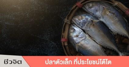 ปลาทู อาหารจากปลาทู ประโยชน์ของปลาทู