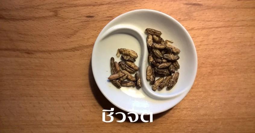 แมลงกินได้, อาหารโปรตีนสูง, แมลงทอด, แมลง, ประโยชน์ของแมลงกินได้