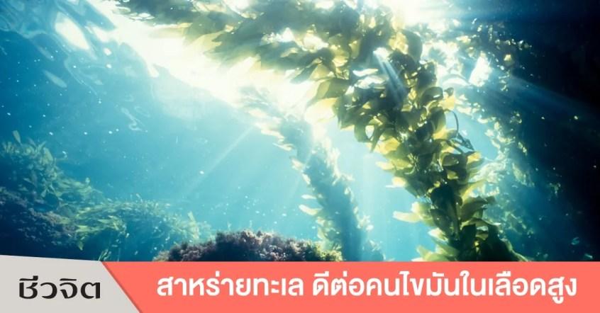 สาหร่ายทะเล, Seaweed, สาหร่าย, ประโยชน์ของสาหร่าย, สาหร่ายแต่ละชนิด
